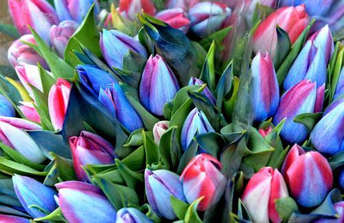 Спрос на тюльпаны в Красноярске находится на высоком уровне
