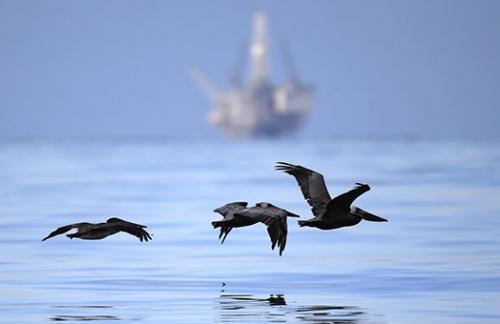 ОПЕК предсказал возвращение цен на нефть к $100 через четверть века